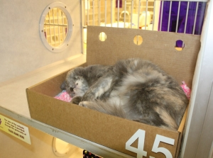 cat_box_4
