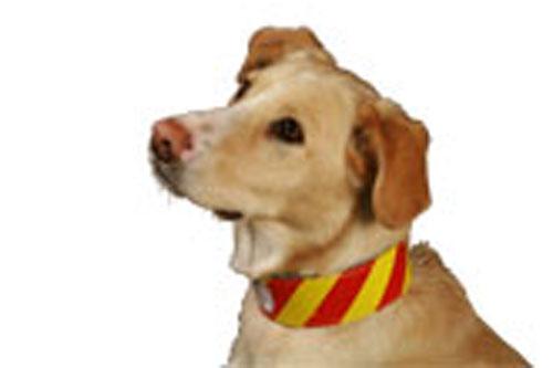 Dangerous Dog Collar