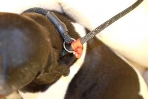 Slip Leash Cord Lock